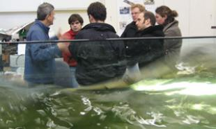 Experts in Energy Systems and Wave Power work in tandem at Edinburgh University